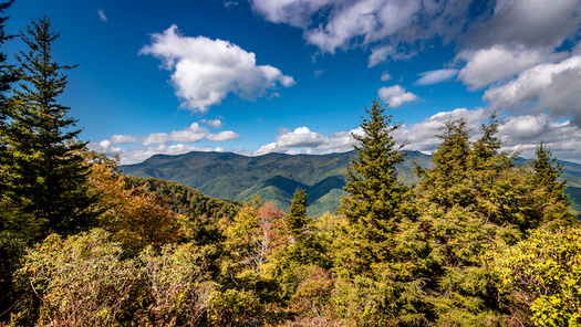 More than 170,000 acres in North Carolina are protected under the Roadless Rule, a federal law that blocks most commercial road-building and development in national forests. (Adobe Stock)