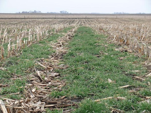 The 2018 farm bill increased the payment level for practices such as cover crops, advanced grazing management and resource-conserving crop rotations. (iowabeefcenter.org)