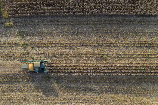 Climate change is projected to adversely impact nationwide yields of corn, soybeans, rice, sorghum, cotton, oats, and other crops. (Adobe Stock)