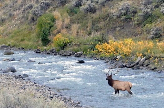 Public participation in evaluating projects proposed in South Park helped protect waterways thriving with elk, trout and other wildlife. (Pixabay)