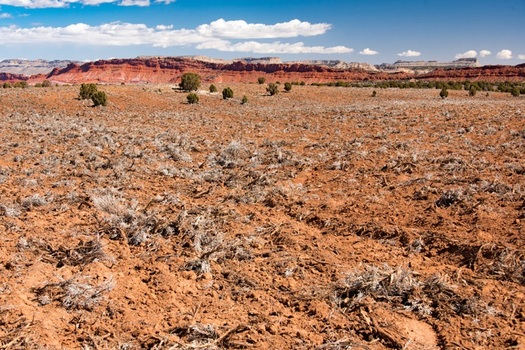 "This area of Utah's Grand Staircase-Escalante National Monument shows the results of mechanical clearing, also called ""mastication,"" of underbrush to create areas for grazing cattle. (SUWA Photo)"