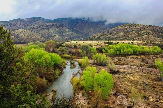 New Mexico's Gila and San Francisco rivers and their tributaries make up one of the largest undammed watersheds in the lower 48 states. (circleofblue.org)