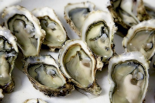 The Gulf of Mexico historically has been the largest producer of oysters in the nation. (photo-graphe/Pixabay)