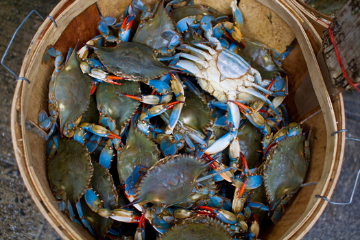 The crab industry in Virginia has been hit hard by restaurant shutdowns during the pandemic. (Adobe Stock)