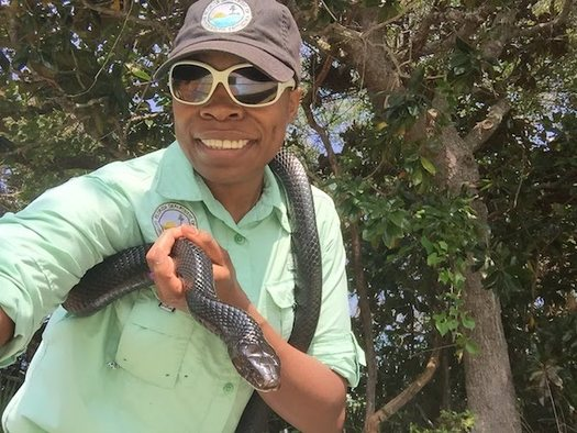 Josephine Spearman, education coordinator for the Guana Tolomato Matanzas National Estuarine Research Reserve near Jacksonville, Florida, holds Indy, an eastern indigo snake, while filming an educational video for teachers and students to use during the COVID-19 quarantine. (Guana Tolomato Matanzas NERR)