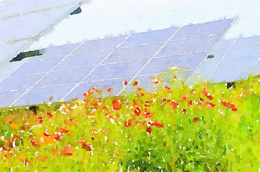 To benefit pollinators, the Giant Co.'s new solar farm has been seeded with flowering plants throughout the site. (Center for Pollinators in Energy)