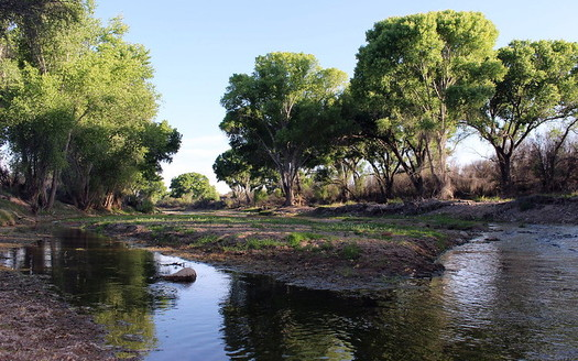 Conservation groups say they fear construction of a border wall across the San Pedro River could cause flooding during the rainy season and block a migration route for endangered animals. (Flickr)