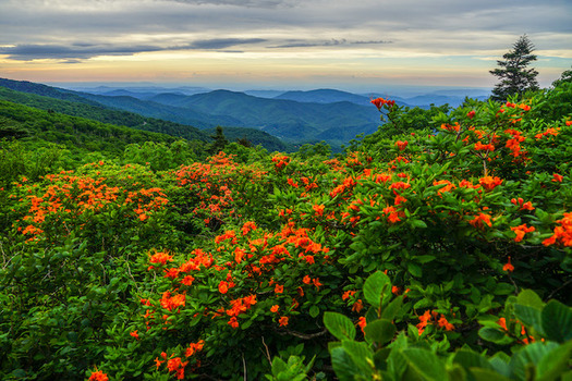 The Roan Highlands in North Carolina is a conservation focus area of the Southern Appalachian Highlands Conservancy. (Travis Bordley)