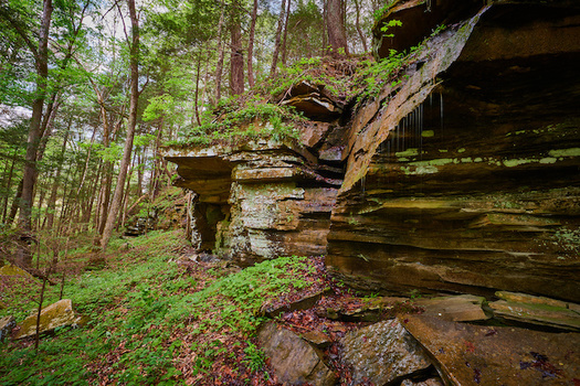 Of 372 plant species that Kentucky lists as endangered, threatened or of special concern, 206 are conserved in state nature preserves and natural areas. (Adobe Stock)