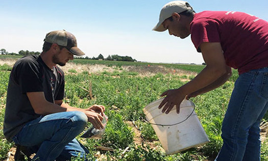"""Penistaja soils are the state soil of New Mexico and cover more than 1 million acres. In Navajo, """"Penistaja"""" means """"forced to sit."""" (nrcs.usda.gov)"""