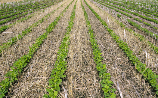 According to the USDA, there was a nearly 50% increase in cover-crop plantings between 2012 and 2017. Wisconsin researchers are gathering data on the effectiveness of these crops as more farmers adopt the practice. (Adobe Stock)