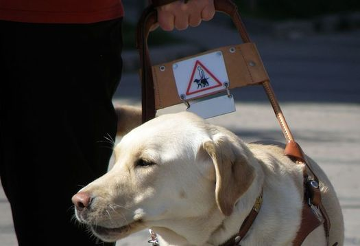 The Help America Vote Act requires jurisdictions responsible for federal elections to provide reasonable accommodations for voters with disabilities, including allowing service animals at poll sites. (Pixabay)
