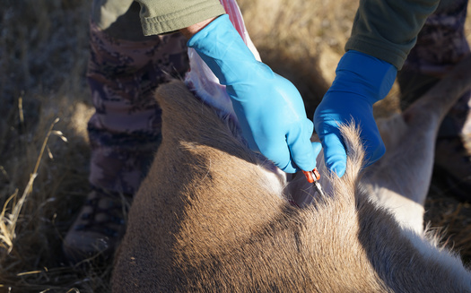Over the past four years, North Dakota hunters have donated more than 7,000 pounds of deer and other wild game meat to food shelves across the state. (Adobe Stock)