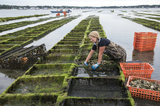 The program aims to support more than 100 shellfish companies and preserve more than 200 jobs. (Cavan Images/Adobe Stock)