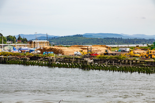 Exports of timber from Oregon to China this year could be a tenth of what they have been in the past. (dbvirago/Adobe Stock)