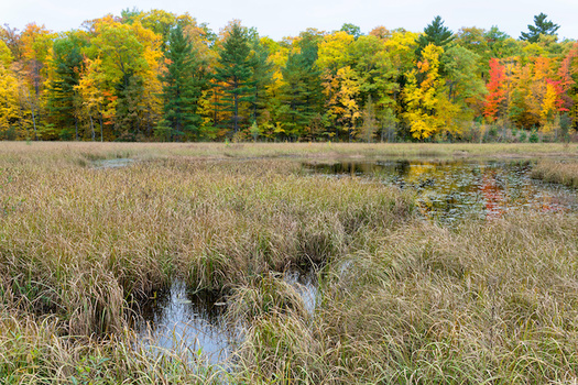 The new EPA rule has removed federal Clean Water Act protections from isolated wetlands and intermittent streams. (wolterke/Adobe Stock)