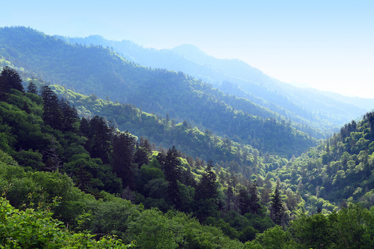 National forests are a massive sink for carbon dioxide that help stave off the effects of global warming. (Adobe Stock)