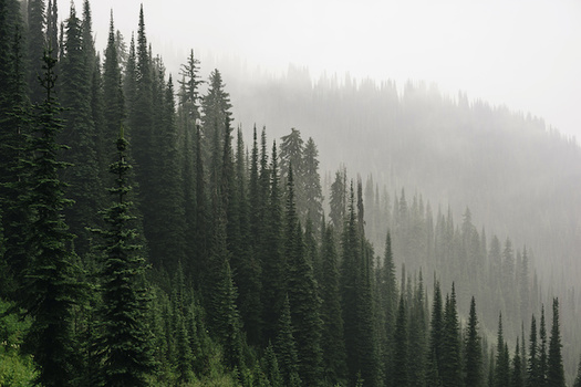 Reforesting Idaho could absorb as much as 4.36 million cubic tons of carbon each year. (jeff/Adobe Stock)