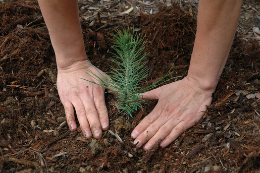Large-scale reforestation has been identified as a key natural climate solution to increase carbon sequestration as nations work to decrease greenhouse-gas emissions from fossil fuels. (Pixabay)