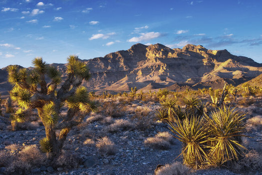 A new bill would expand the Desert National Wildlife Refuge by more than 1.3 million acres. (Kurt Kuznicki)