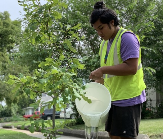 Trees reduce the energy consumption for cooling homes in the United States by 7%, according to estimates from the U.S. Forest Service. (Donovan Cole/Trees Forever)