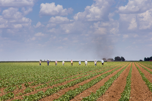 Farmworkers can work 80-hour weeks, but aren't eligible for overtime pay. (David/Adobe Stock)