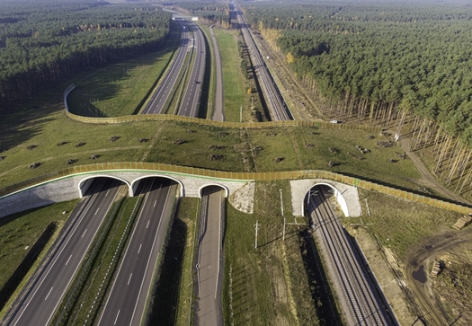 Conservation groups say land bridges can prevent collisions between migrating wildlife and vehicles on highways and rail lines. (jacek/Adobe Stock)