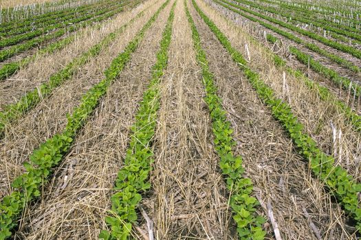 Supporters of cover crops say they can help with a farmer's bottom line in the long run while protecting natural resources. (Adobe Stock)