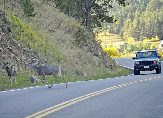 The number of animal-vehicle collisions has doubled in the past 15 years. (Heather Paul/Flickr)