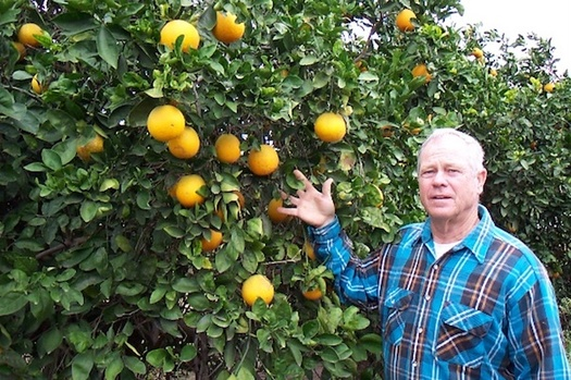 Citrus crop losses in Texas were estimated at $230 million following February's freak winter storm, according to AgriLife Extension at Texas A&M. (sanantonio.org)