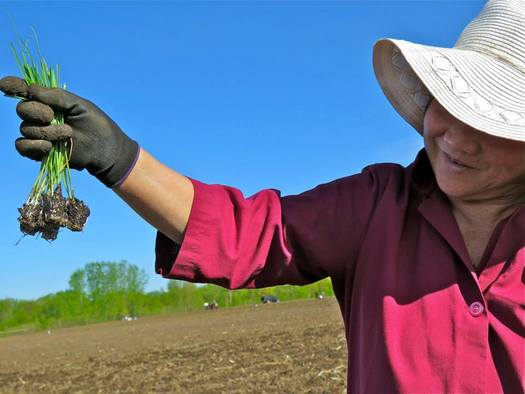 Since 2011, Minnesota's Hmong American Farmers Association has helped producers with access issues, including financial tools. (Photo courtesy of HAFA)