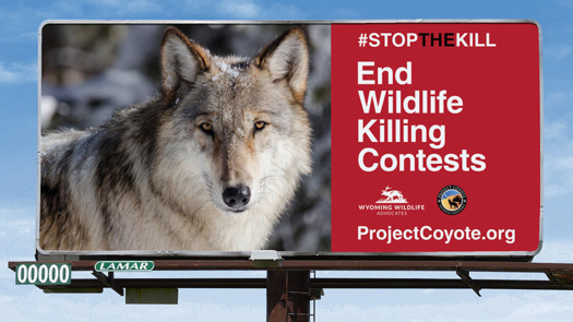Wyoming is home to many wildlife-killing contests, including the Wyoming Best of the Best and other privately-run events. (Project Coyote)