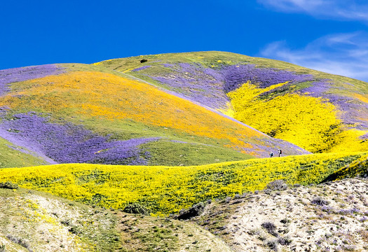 President Bill Clinton used the Antiquities Act in 2012 to designate the Carrizo Plain National Monument. (Bureau of Land Management)