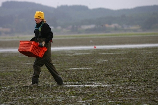 Coastal Oregon communities like Yaquina Bay are in the process of updating their estuary management plans. (Jessica Miller/Oregon State University)