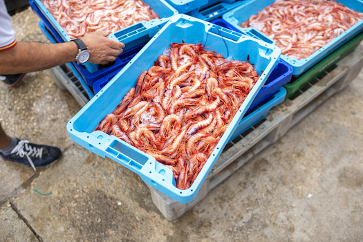 Trawl nets are responsible for the majority of fish and shrimp catches worldwide. (Adobe Stock)<br />
