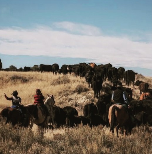There are more than 58 million acres of farm and ranch land in Montana. (Annika Charter-Williams)