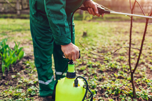 The U.S. Environmental Protection Agency says it will stop the use of the pesticide chlorpyrifos on all food, citing specific risks to children and farmworkers. (Adobe Stock)