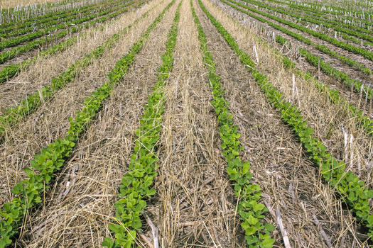 According to the most recent Census of Agriculture, cover-crop acres in the United States have increased to 10 million. (Adobe Stock)