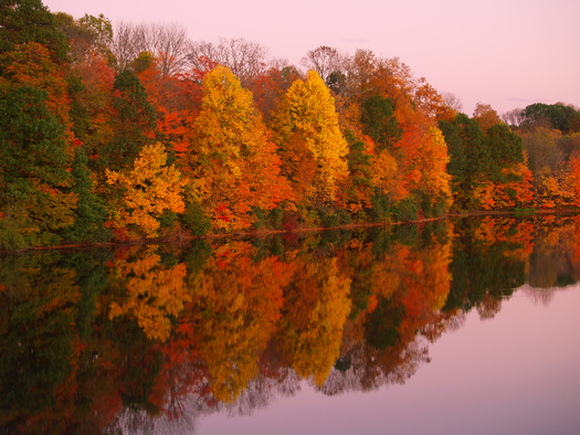 Northern Pennsylvania counties such as Potter, McKean, Susquehanna and Wayne are experiencing peak fall foliage this week, according to the state Department of Conservation and Natural Resources. (Adobe Stock)