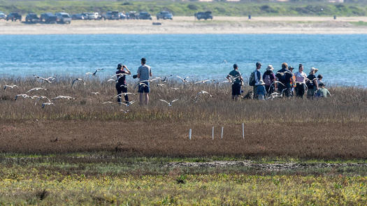 Birders place artificial nesting platforms to aid endangered species in the Kendall-Frost Marsh in Mission Bay. (Craig Chaddock)