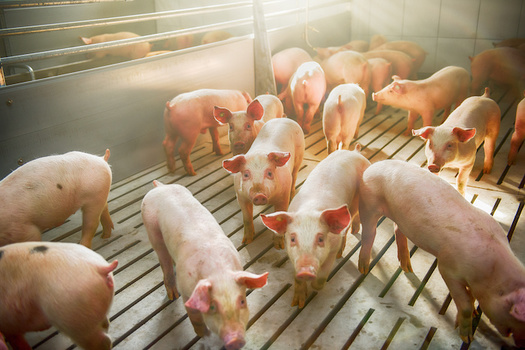The United States currently has 2,000 operational biogas systems linked to farms, landfills, wastewater treatment facilities and food waste, according to the Environmental and Energy Study Institute. (Adobe Stock)