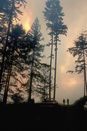 Trees burning in forest fire. © Corbis.  All Rights Reserved.