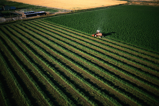 PHOTO: Large farm being harvested. © Corbis.  All Rights Reserved.
