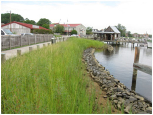 PHOTO: Example of a living shoreline. Courtesy of the Chesapeake Bay Trust.