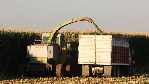 PHOTO: Corn being harvested. Photo credit: Deborah C. Smith