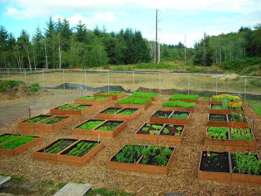 PHOTO: The garden at CCA Food Bank of Clatsop County. Photo courtesy of CCA Food Bank of Clatsop County.