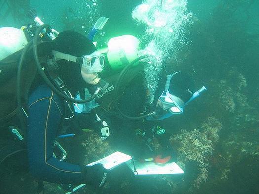 PHOTO: Fish Survey in Progress. Photo courtesy of Reef Check California