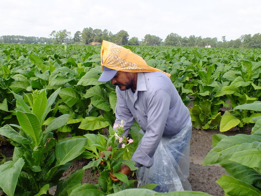 Photo: North Carolina farmworker. Courtesy: NC Justice Center