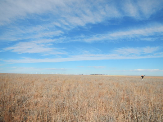 PHOTO - Pheasant hunting near Haxtun, CO; a wind farm is in the background. Courtesy Lew Carpenter, National Wildlife Federation.