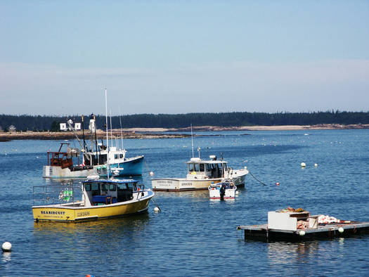 "PHOTO: A new report says lobster fisheries in the Gulf of Maine might be the ""canary in the coal mine"" for disruptive climate change that is warming New England's coastal waters. Photo courtesy U.S. Fish and Wildlife Service."